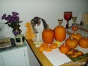 Halloween Tom