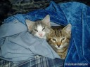 Cats Snuggled Up