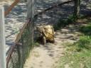 Old Turtle...