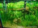 More Live Plants