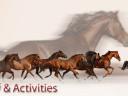 Equine Graphic Modification