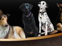 Dog Header Graphic