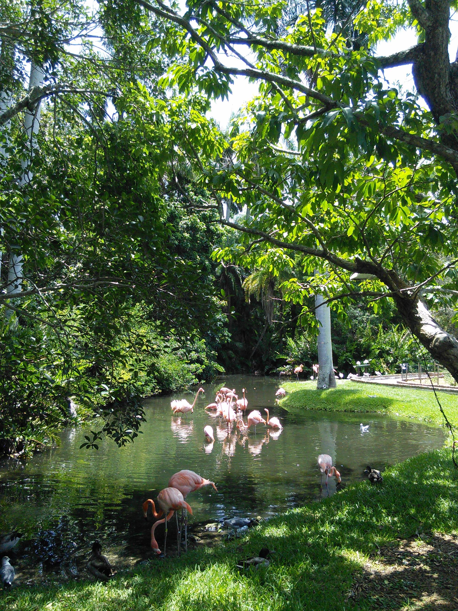 Sarasota Jungle Gardens_10