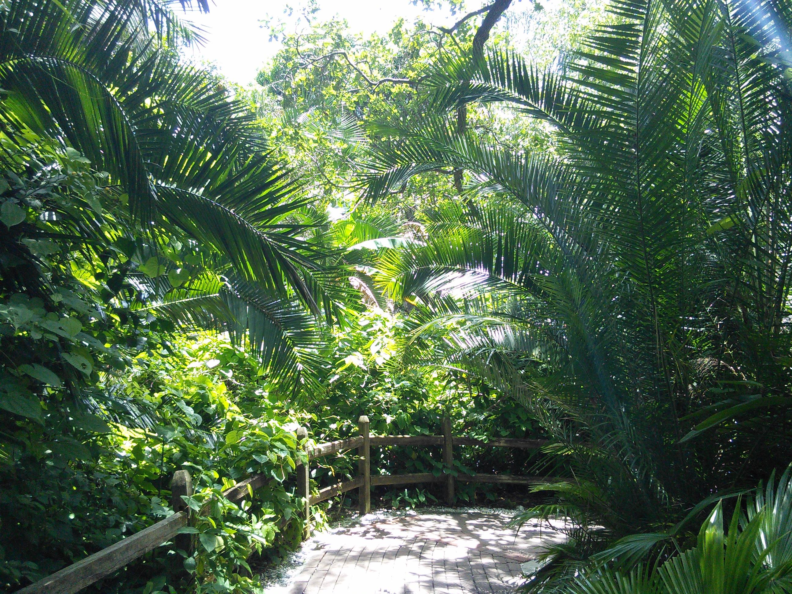 Sarasota Jungle Gardens_1