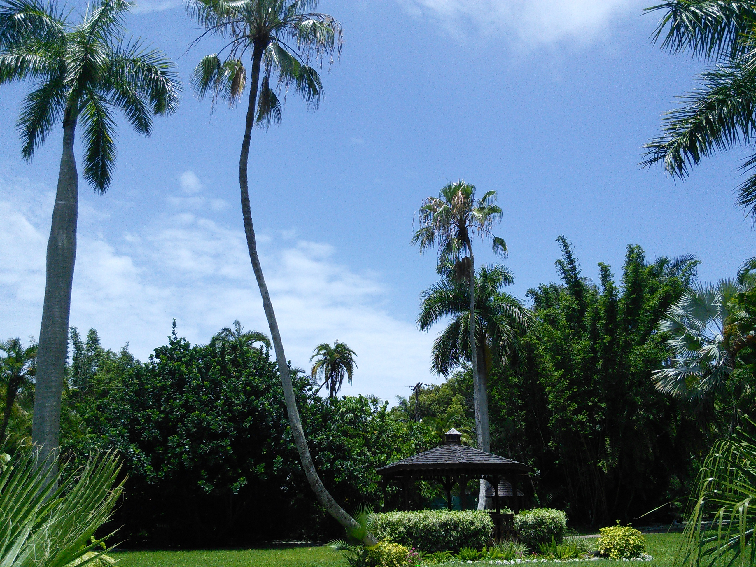 Sarasota Jungle Gardens_2
