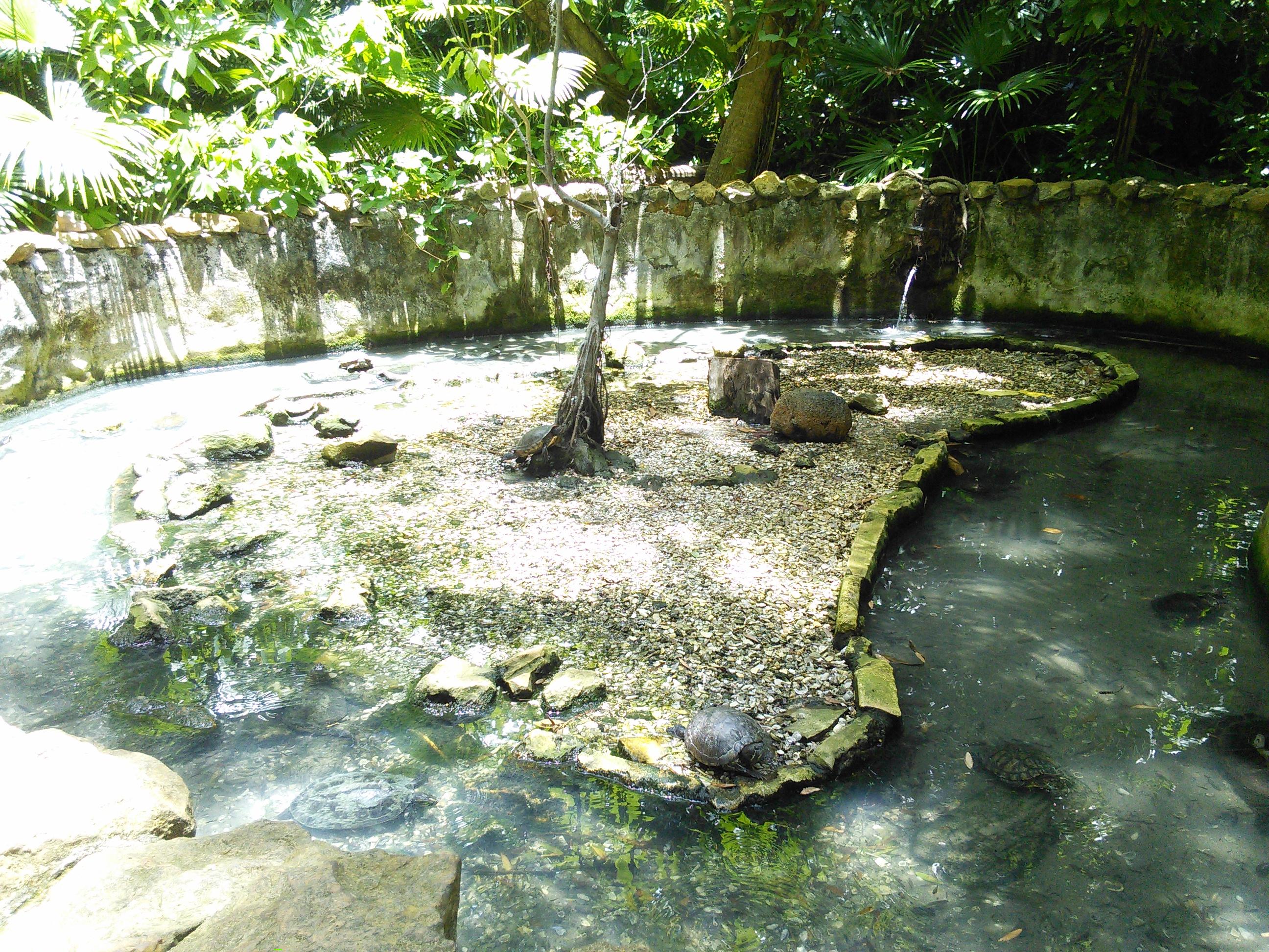 Jungle Gardens In Sarasota Garden Ftempo
