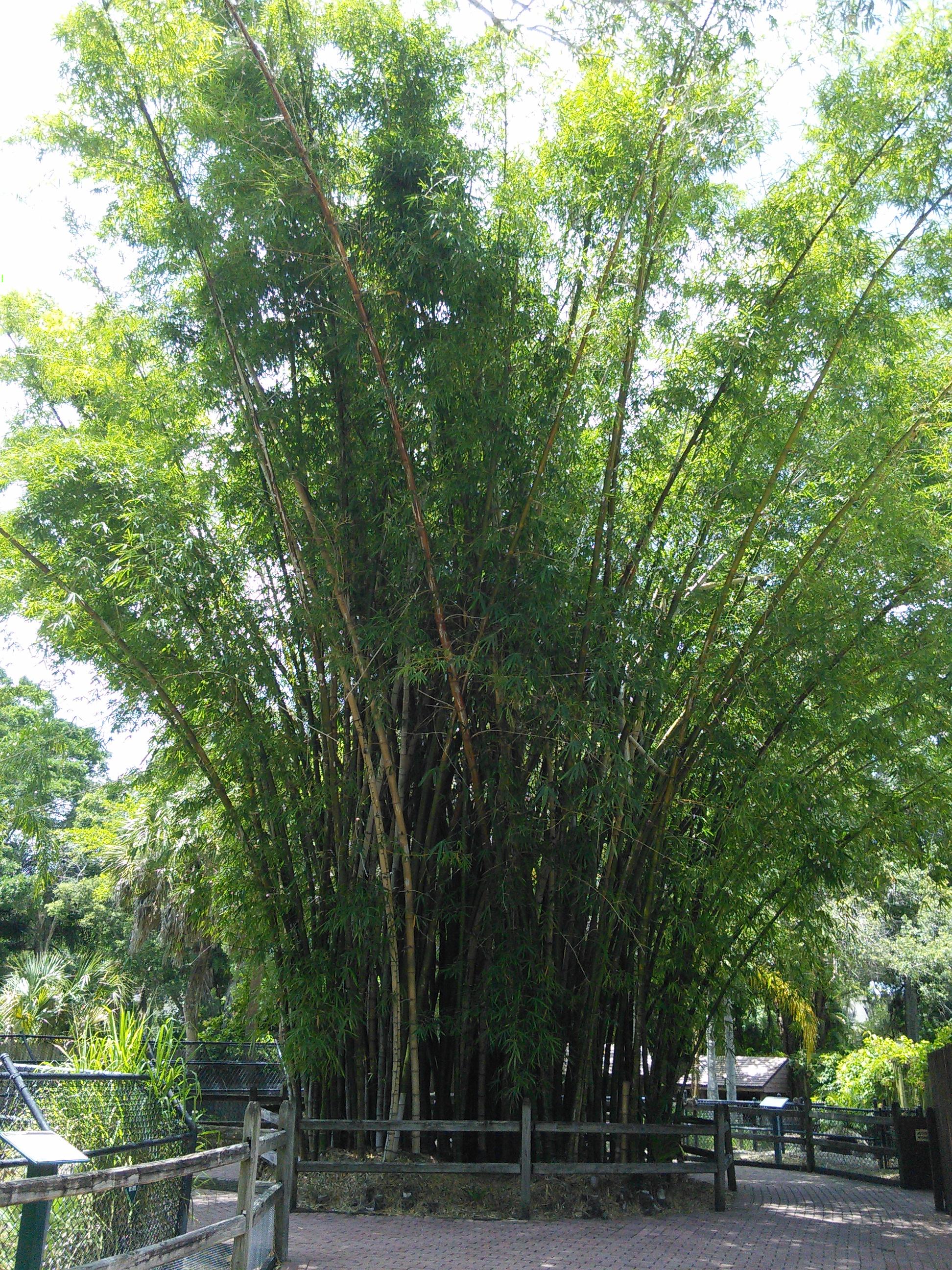 Sarasota Jungle Gardens_9