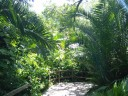 Sarasota Jungle Gardens_1