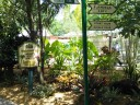 Sarasota Jungle Gardens_3