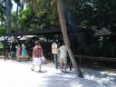 Sarasota Jungle Gardens_4