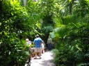 Sarasota Jungle Gardens_5