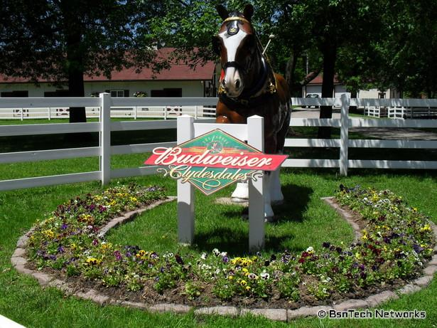 Anheuser Busch Clydesdale Sign