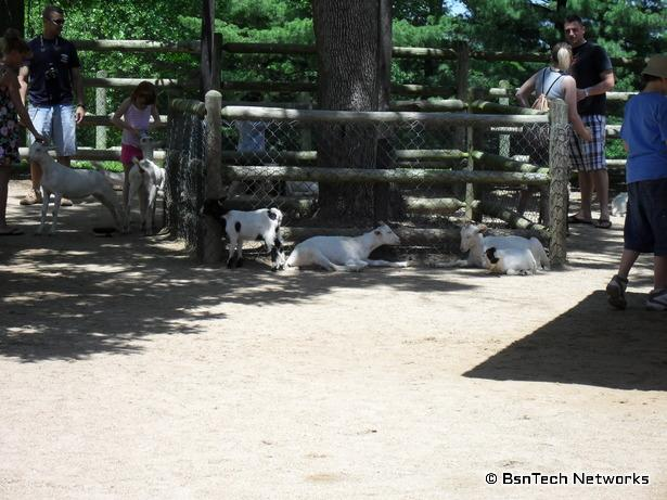 Petting Zoo at Grant's Farm