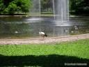 Bird Area/Pond at Grant's Farm