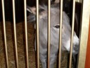 Donkey at Grant's Farm