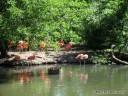 Pink Flamingos at St. Louis Zoo