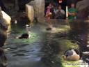 Splashing Penguin