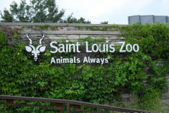 St. Louis Trip - July 2011