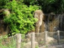 Scenery at the St. Louis Zoo