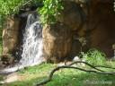 Sacred Ibis & Waterfall