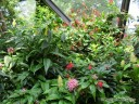 Butterfly Dome