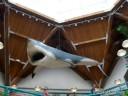 Shark at St. Louis Zoo