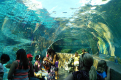 St. Louis Zoo - 8-31-2014