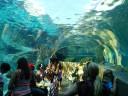 Underwater Seals
