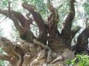 Centerpiece Tree at Animal Kingdom