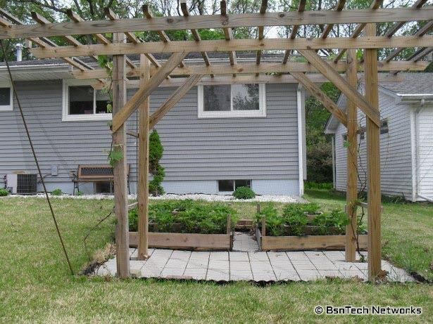 Grape Arbor and Deer Netting