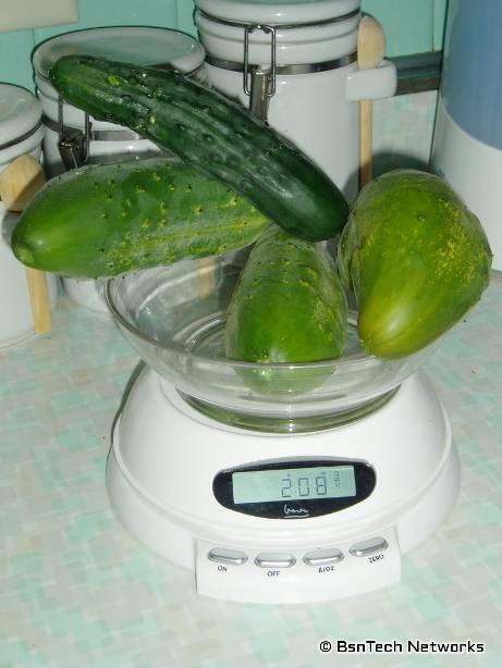 Burpee Pickler & Marketmore 76 Cucumbers