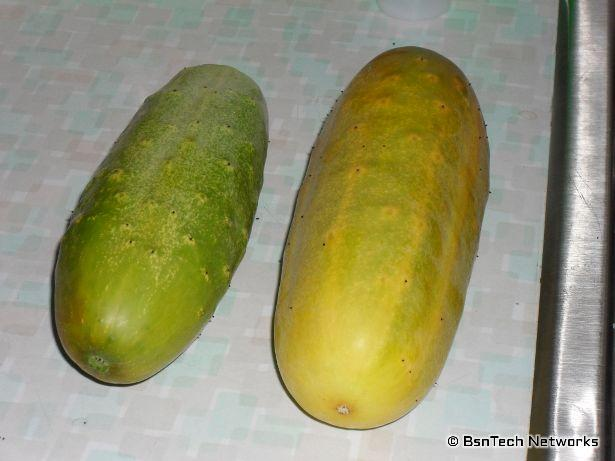 Yellow Cucumbers