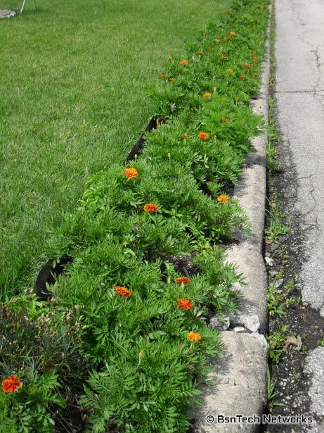 Marigold Curb Appeal Project