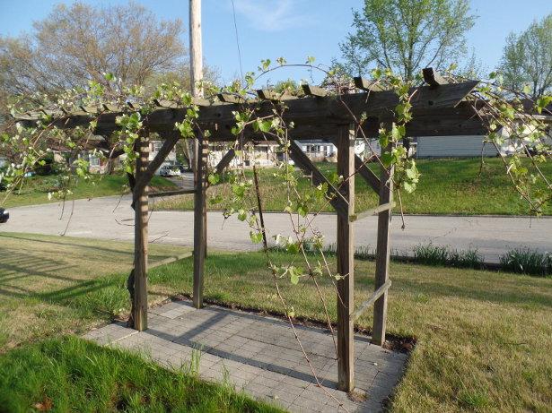 Grape Arbor