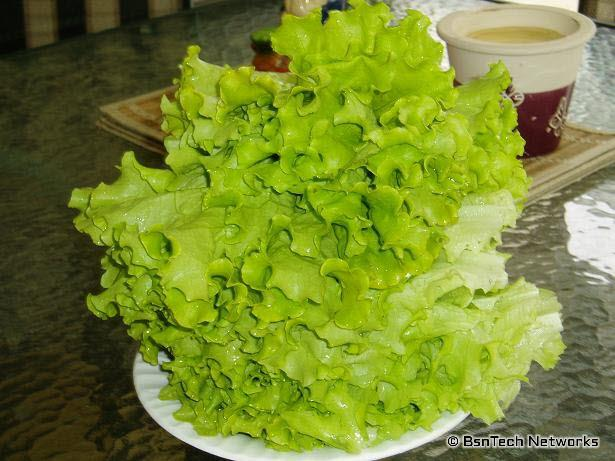 Lettuce from May 15th
