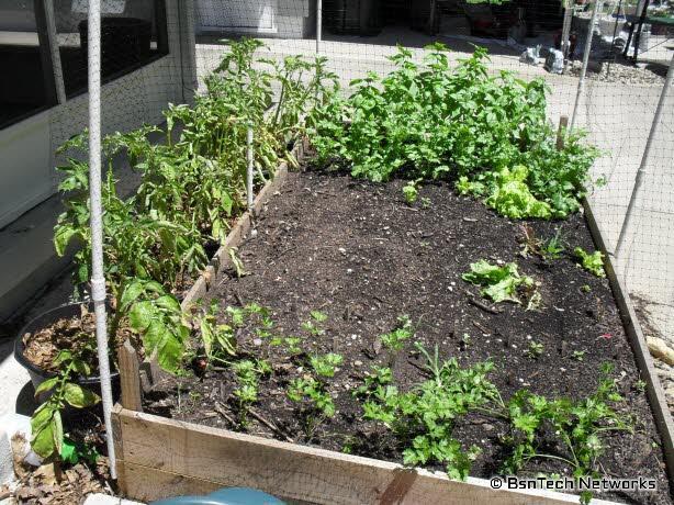 Patio Herb & Lettuce Garden