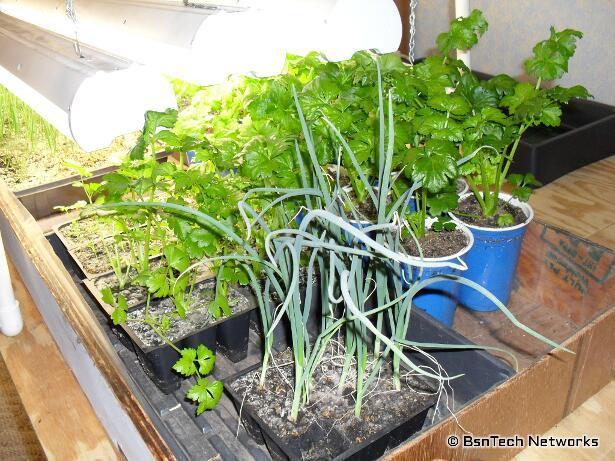 Growing Vegetables Under Lights