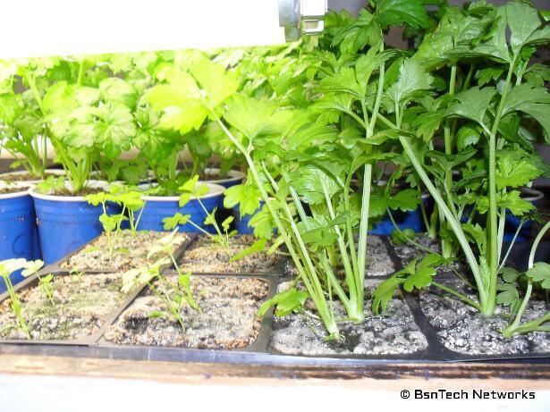 Plants Under Fluorescent Lights