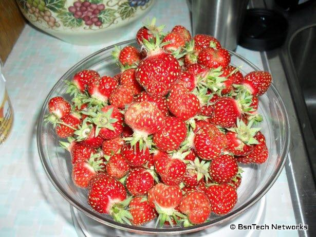 Tri-Star Strawberries