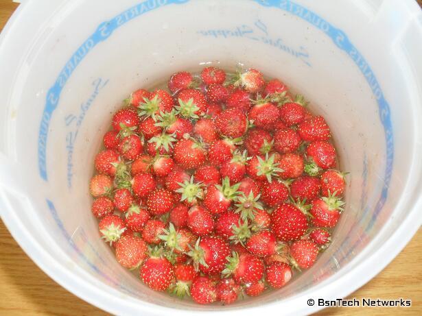 Tri-Star Strawberries