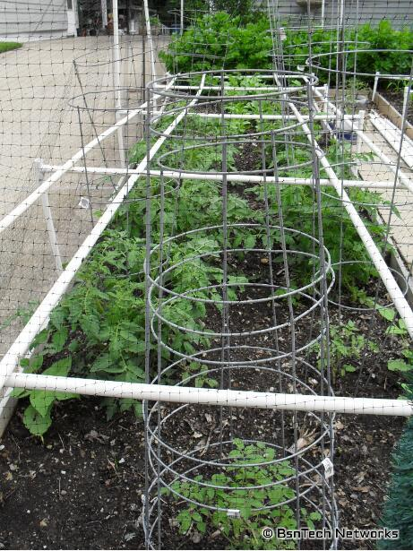 Tomatoes, Radishes, Peppers, Green Beans